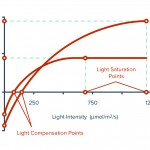 Light-Compensation-Points