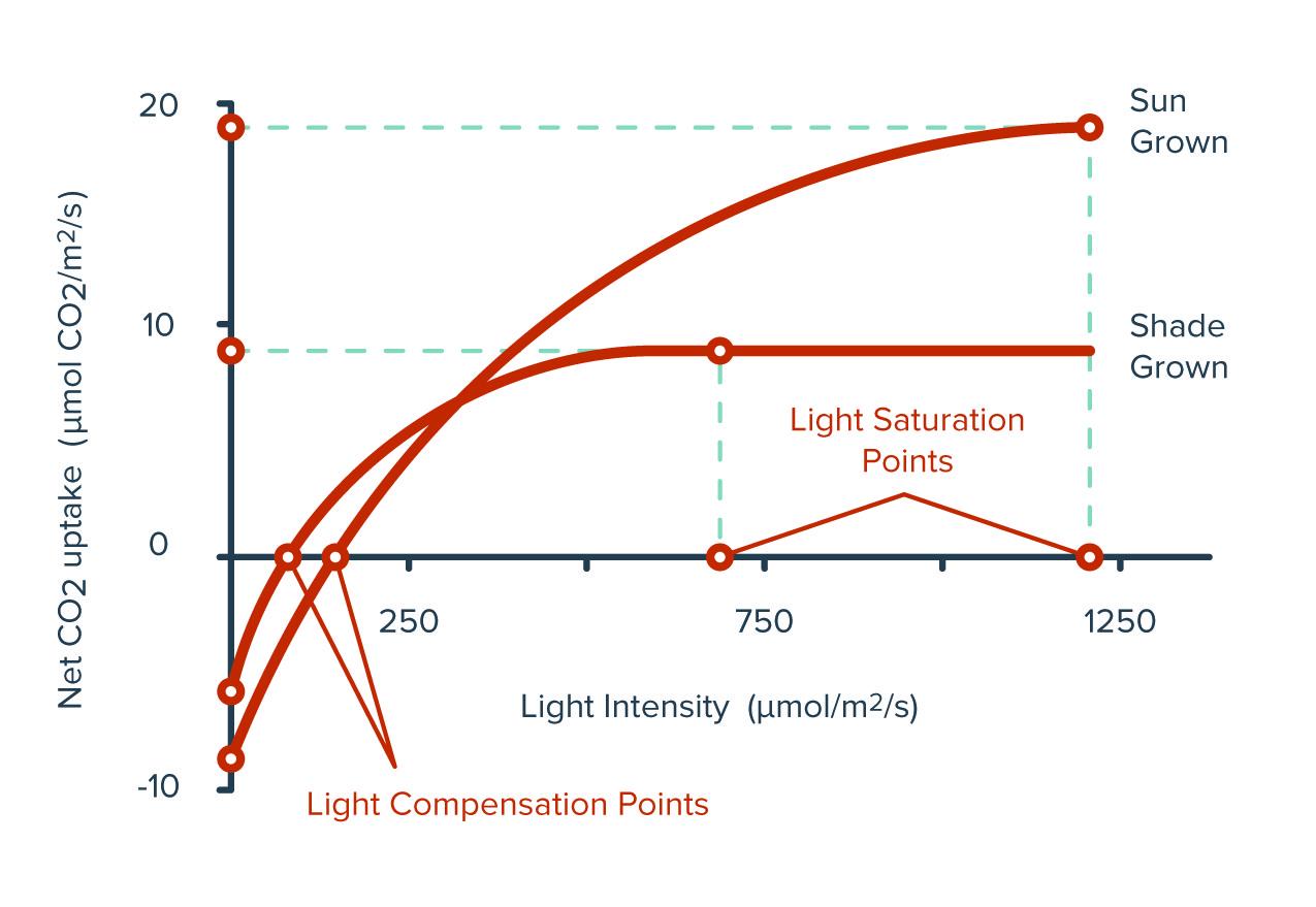 Light-Compensation-Points